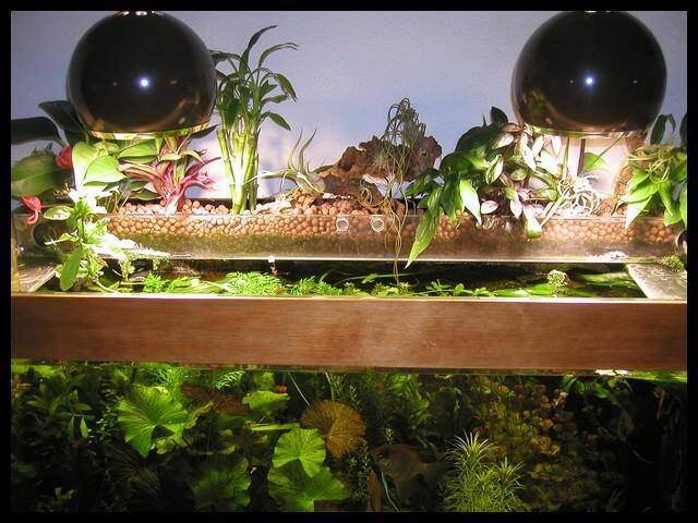 Filtration par les plantes