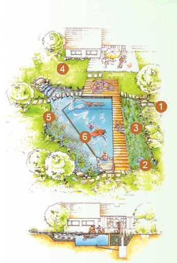 Principe piscine naturelle