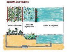 Schema piscine naturelle