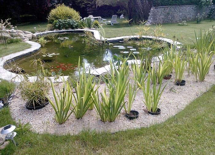bassin naturel elegant mas de font chaude notre bassin naturel with bassin naturel elegant. Black Bedroom Furniture Sets. Home Design Ideas