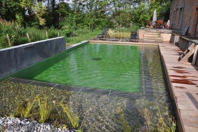 plante piscine naturelle maison parallele. Black Bedroom Furniture Sets. Home Design Ideas