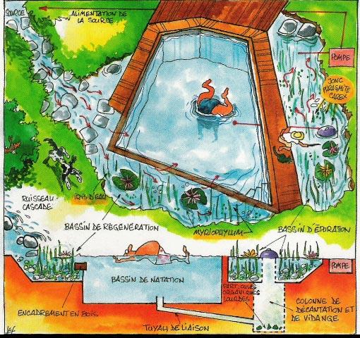 Fonctionnement piscine naturelle